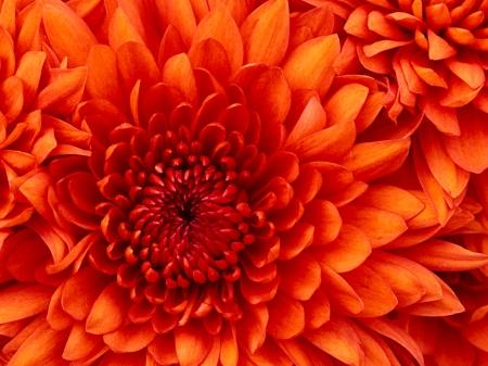 La floración seglar en la Orden
