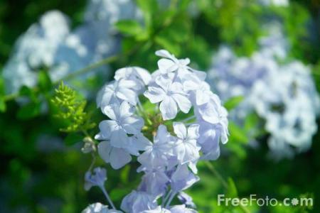 1501_06_8---Alcazar-de-los-Reyes-Cristianos-The-Alcazar-of-the-Christian-Kings-Gardens_web