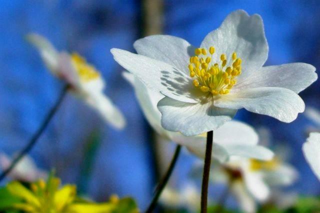 flor.blanca.cielo