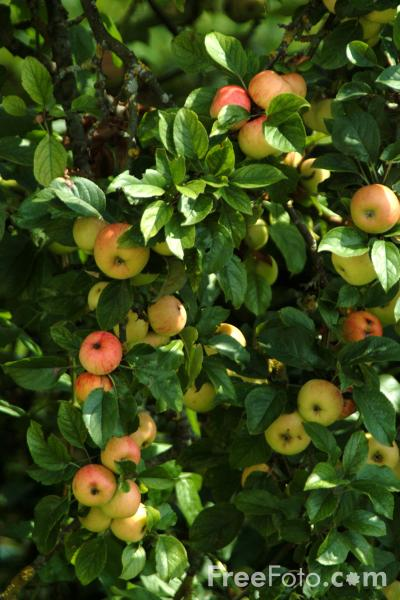 07_13_52---Apples_web
