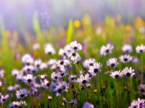 716623-1024x768-flowers