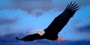 los que esperan en el Señor renuevan sus fuerzas, echan alas corno las águilas