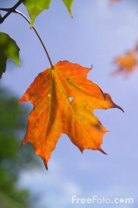 19_35_71---Autumn-color-in-New-Hampshire_web