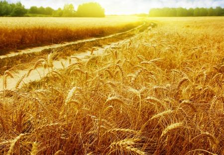 El resto cayó en tierra buena: nació, creció y dio grano; y la cosecha fue del treinta o del sesenta o del ciento por uno