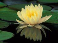 Los que procuran la paz están sembrando la paz, y su fruto es la justicia