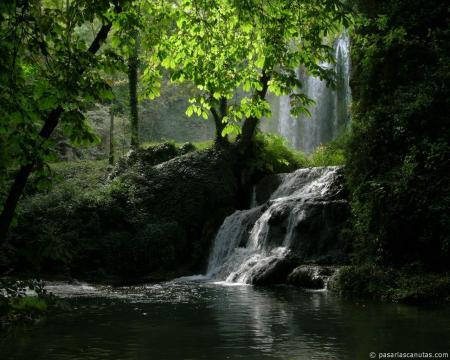 Como busca la cierva corrientes de agua, así mi alma te busca a ti, Dios mío