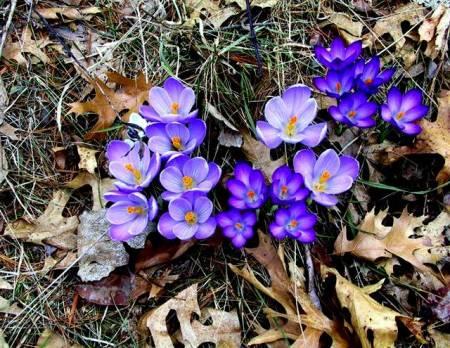 flores-moradas-hojas-secas
