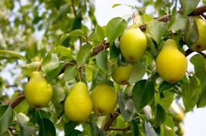 Cada árbol se conoce por sus frutos