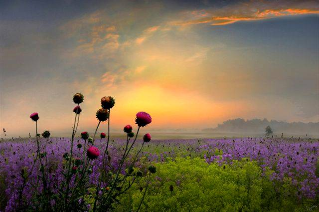 flores.amanecer
