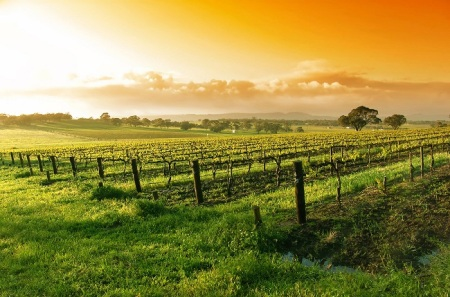 Blaxland-Wine-Group-Australian-Vineyard-at-Sunset