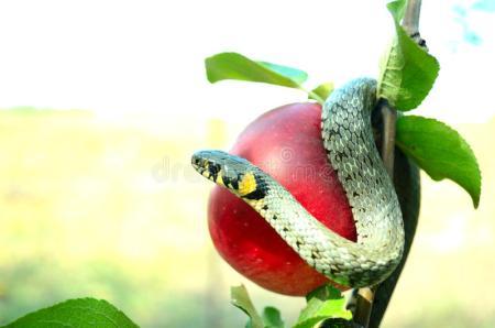 tentador-de-la-serpiente-20960102